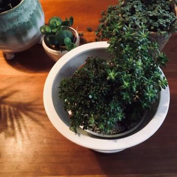 グリーン、植物